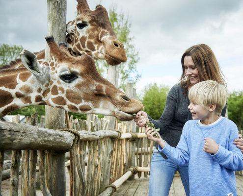 Giraffodring